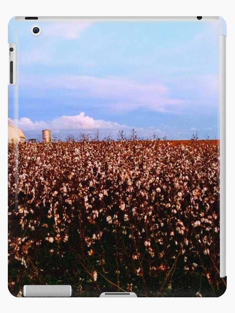 Cotton Field with White Barn by danielpsparks