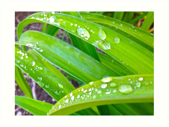 Water Leaves by SomeArtsyStuff