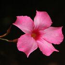 pink delight by ANNABEL   S. ALENTON