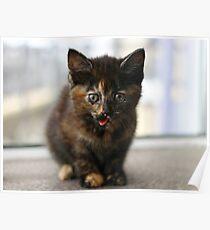 Tortie kitten Poster