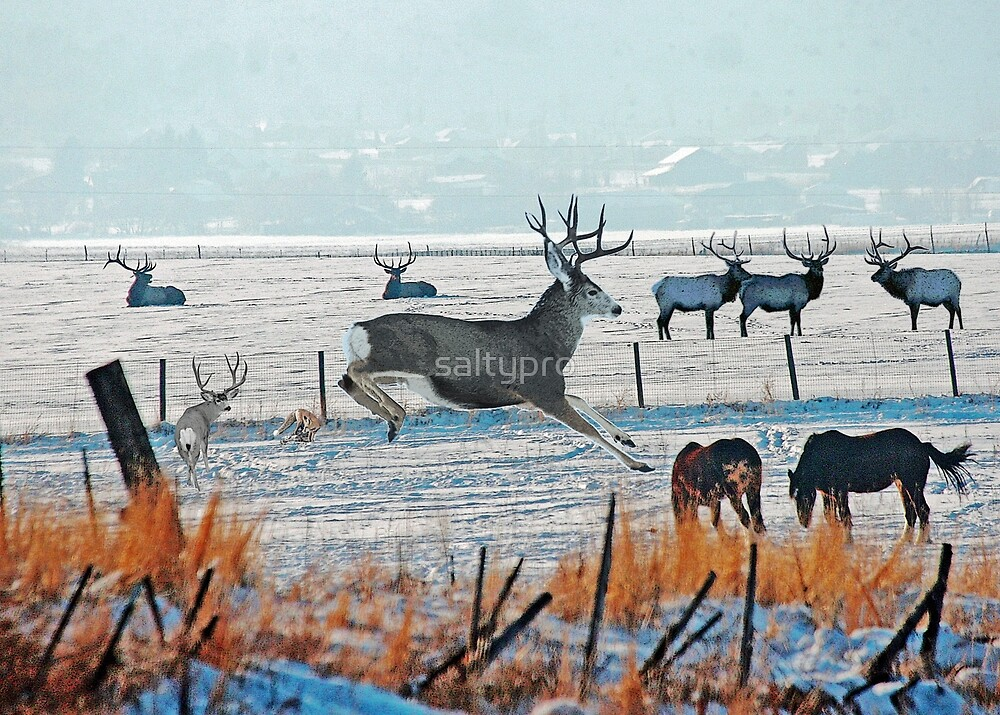 Winter Wildlife by saltypro
