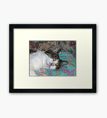 Honey Sleeping Framed Print
