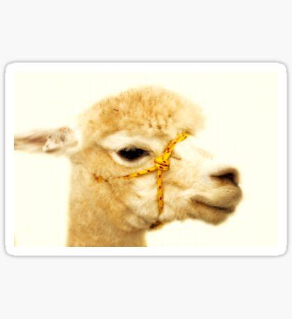 Porträt eines Alpakas Sticker