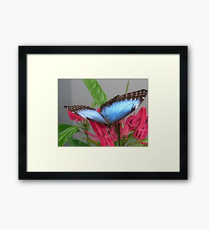 Sipping Nectar Framed Print