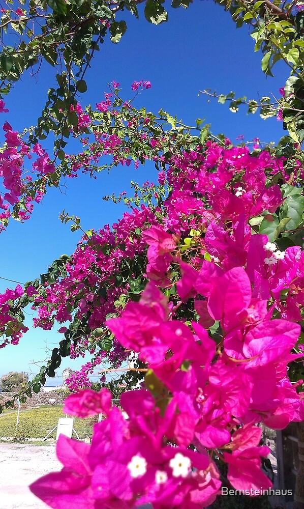 Bougainvillea - triple flower by Bernsteinhaus