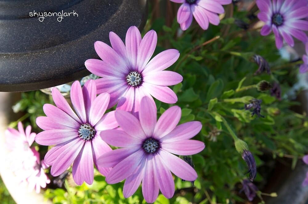 Wildflowers by skysonglark