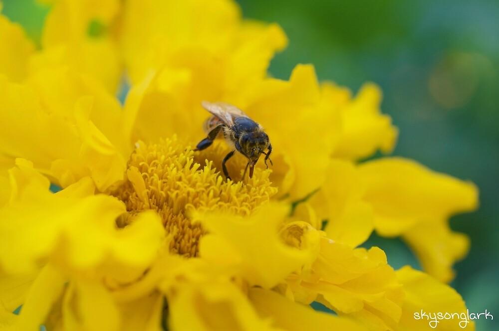 Bee by skysonglark