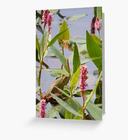 Spring Frog Greeting Card