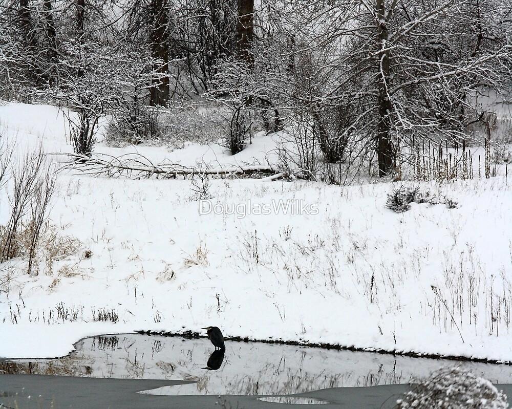 Blue Heron in Winter by DouglasWilks