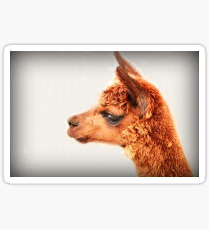 Ein Alpaka-Porträt Sticker