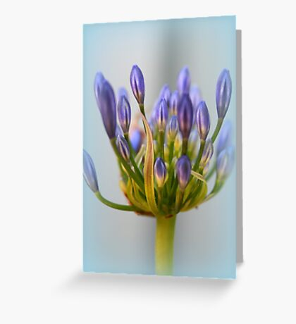 Agapanthus Flower Greeting Card