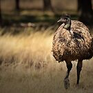 Approaching Emu by Dennis Stewart