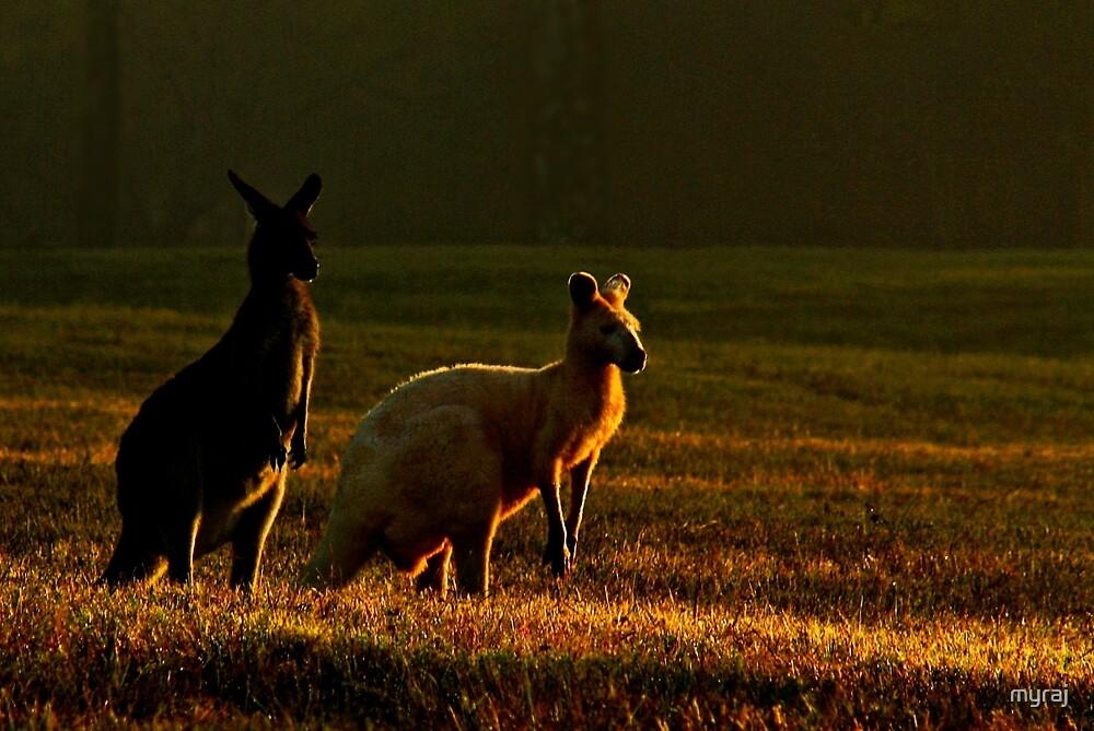 Friends at Sunrise by myraj