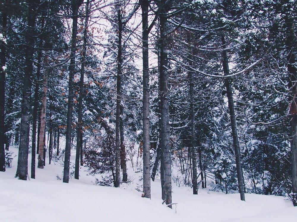 Winter Forest by asylumspirit