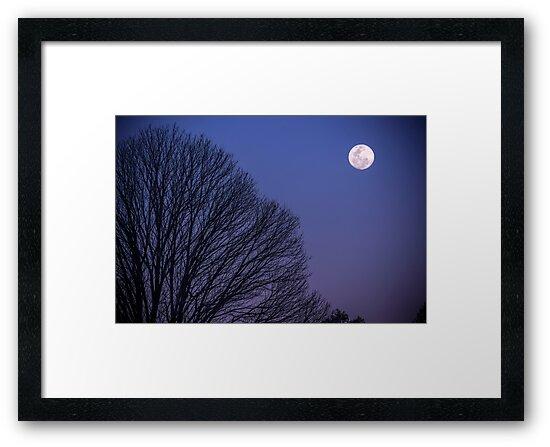 Winter Moon by Jason Wehbe