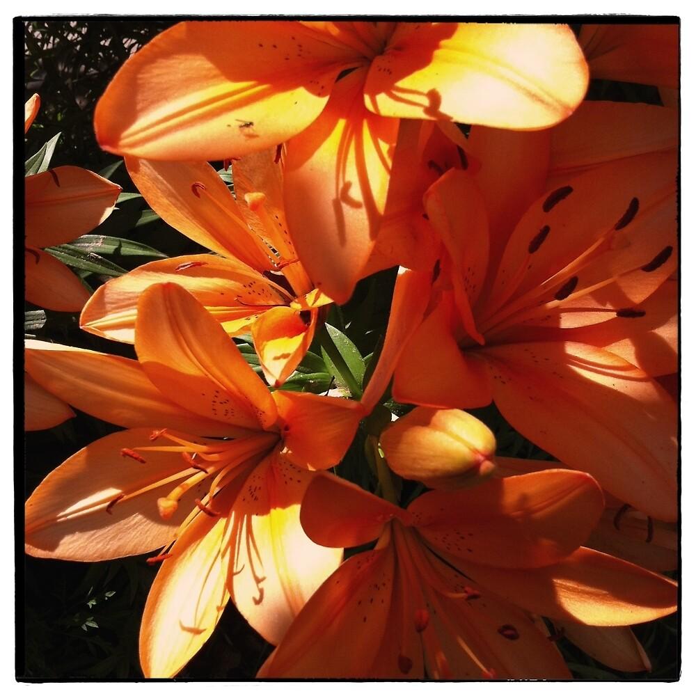 Lilies in Sunlight by ArthurDurkeeArt