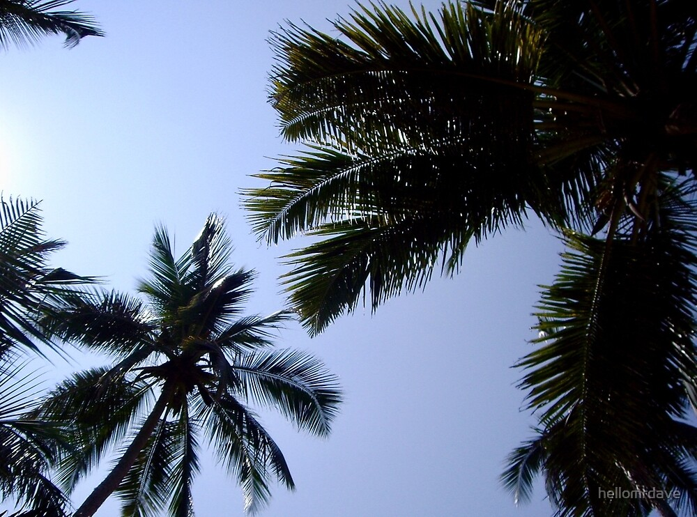 Palm trees by naturalish