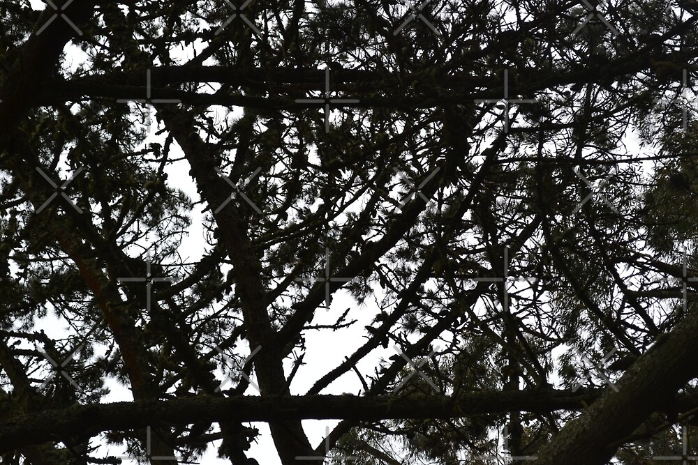 Branches by roarieee