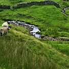 Two Sheep In The Yorkshire Dales by hans p olsen