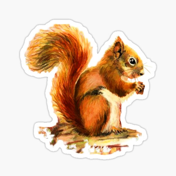 Watercolor Red Squirrel Animal  Sticker
