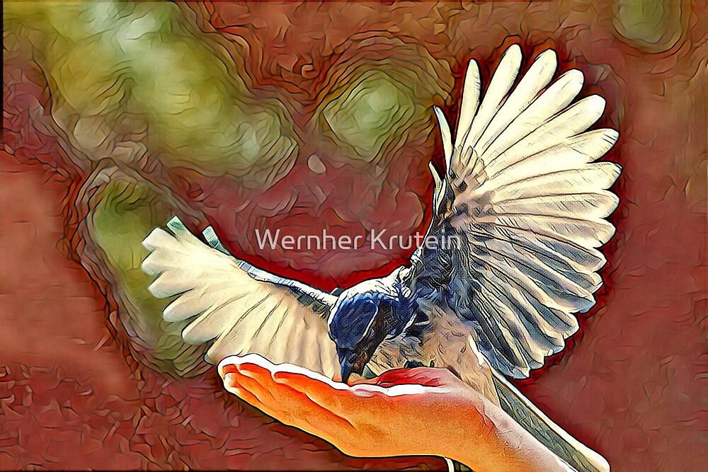 Blue Jay Spreads its Wings by Wernher Krutein
