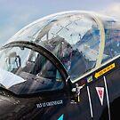 Black Hawk by Bob Martin