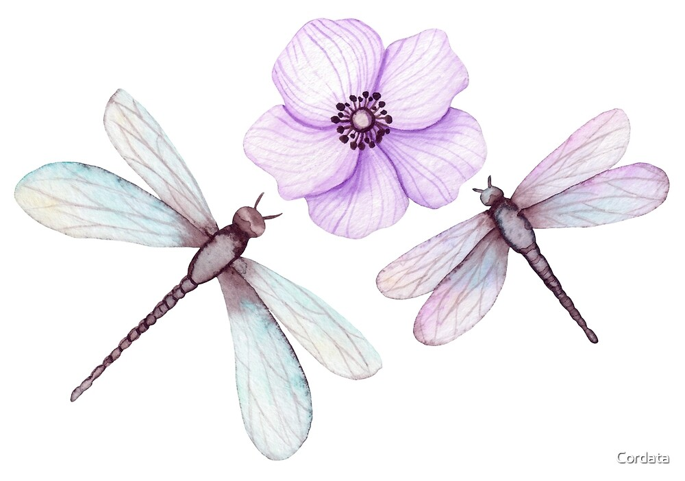 Watercolor Dragonflies and Flower by Cordata