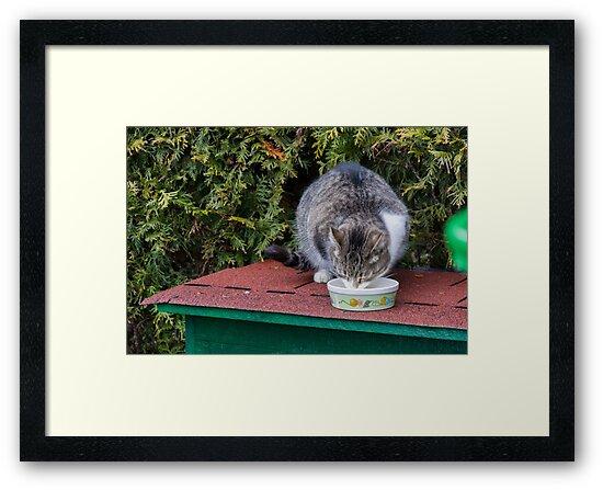 Drinking Cat by Ondrej Syblik