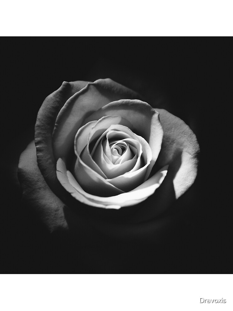 Rose-BW by Dravoxis