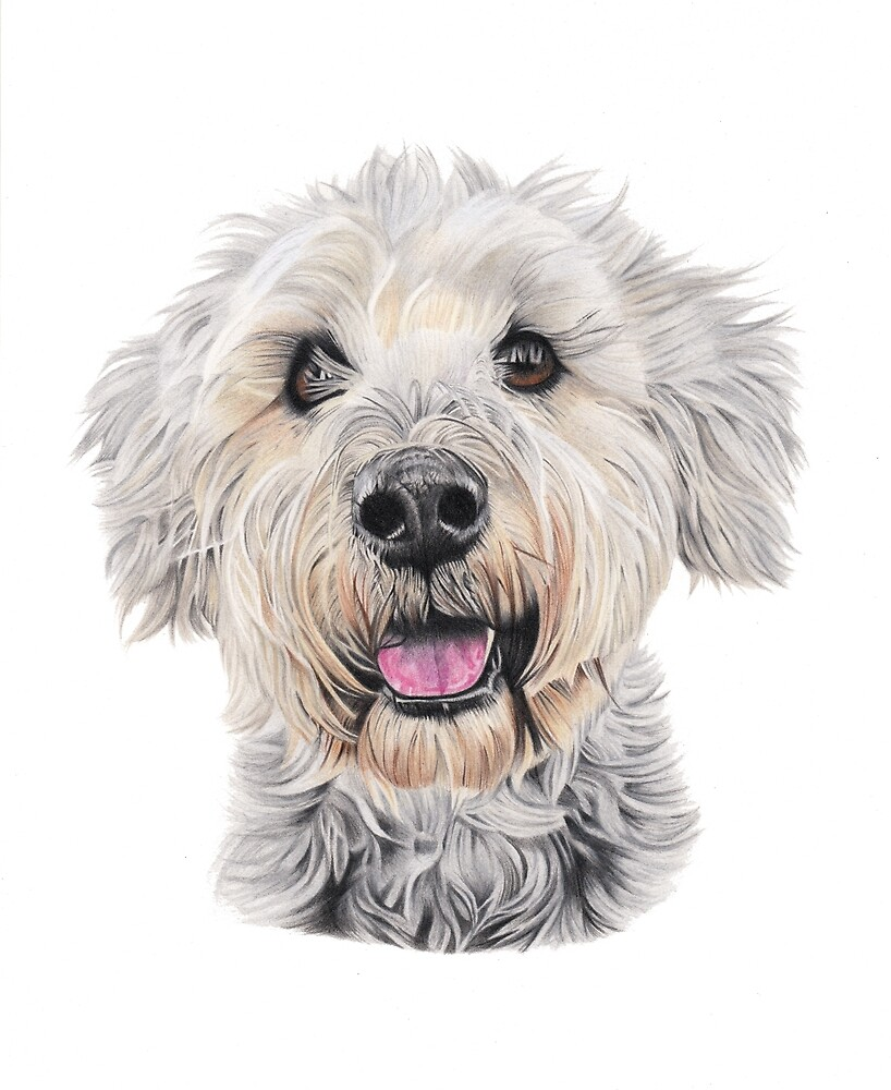 Baxter by Pawstopaper