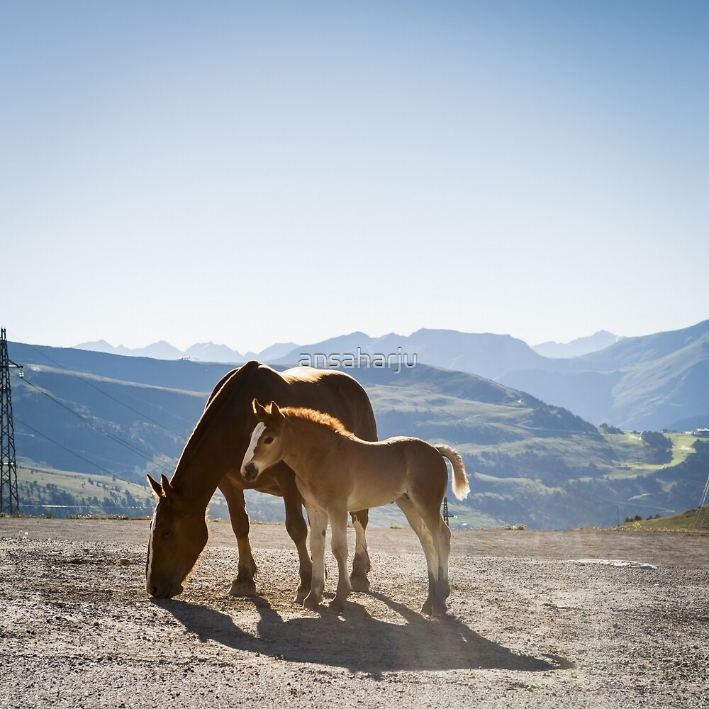 Foal and Mare by ansaharju