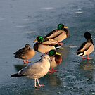 Living Here is Like Walking on Thin Ice by Kate Purdy