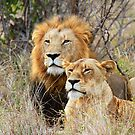 A Handsome Couple in the bush ! by Anthony Goldman