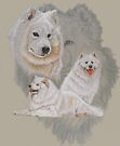Samoyed/Ghost by BarbBarcikKeith