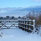Snow patterns by Joyce Knorz