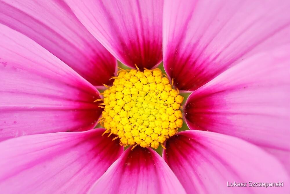 Closeup of pink flower with yellow stamens by Lukasz Szczepanski