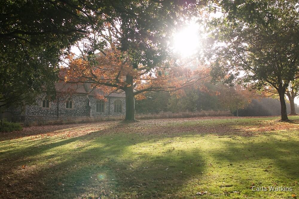 Sunlit autumn scene by Carla Watkins