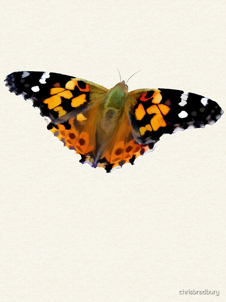 Painted Lady Butterfly by chrisbradbury