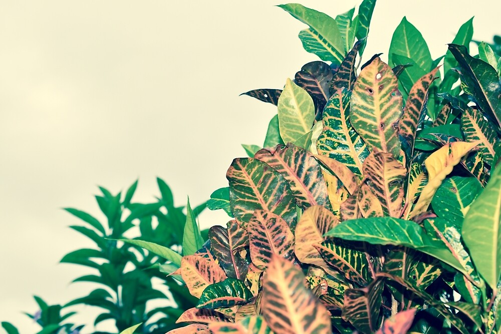 Costa Rican Foliage by umeimages