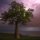 town beach boabab tree lightning  by Elliot62