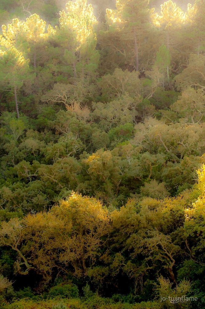 Wild-Forest portugal-Monteehetoma 3 by jo-twinflame