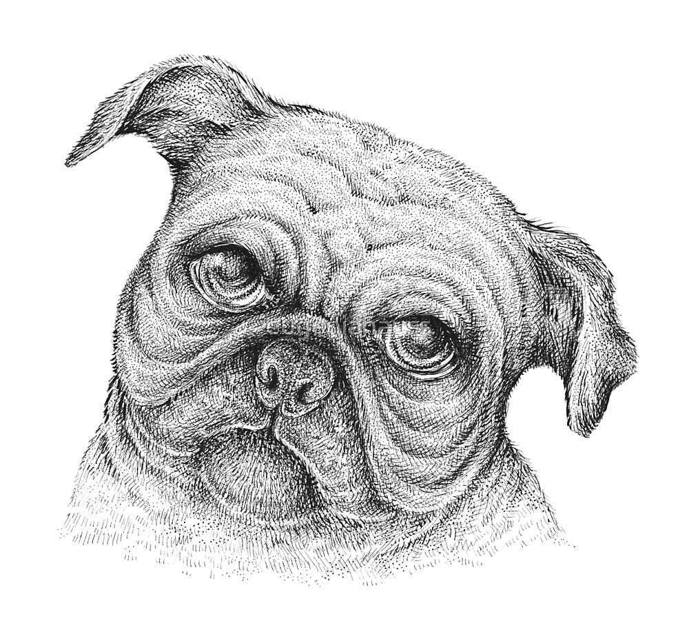 A Pug Dog by eugeniahauss