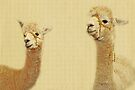 Portrait Of Two Alpacas by Evita