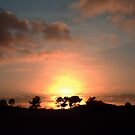 Trees on The Sunset Horizon by ienemien