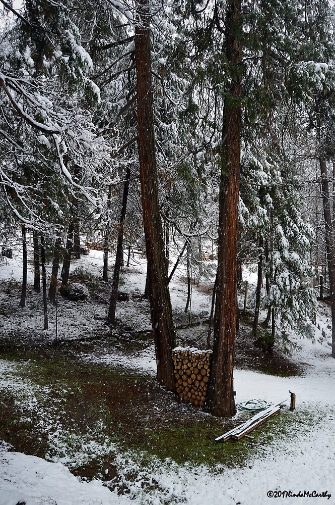 First Snow by LindaPerryMcC