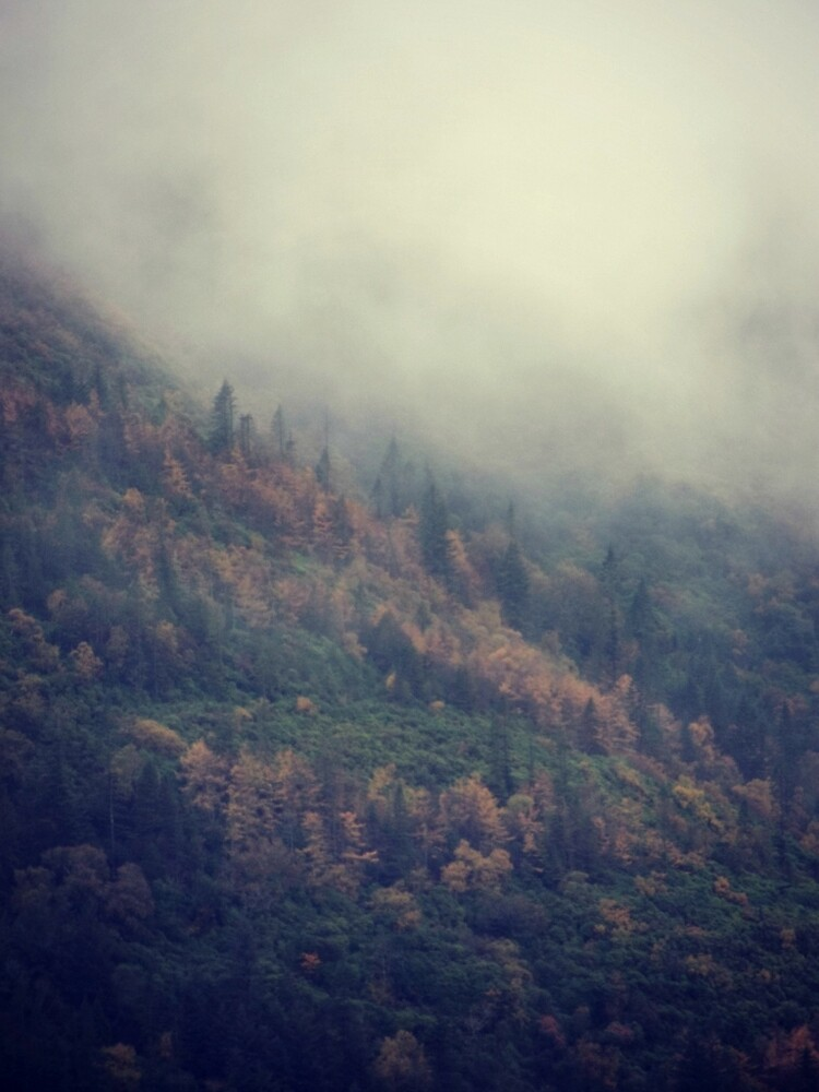 Mist Across The Forest by CurlewandPear