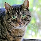 Green Eyed Cat by AndreaEL