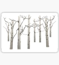 Birch Tree Forest White Bark Aspens Winter Sticker