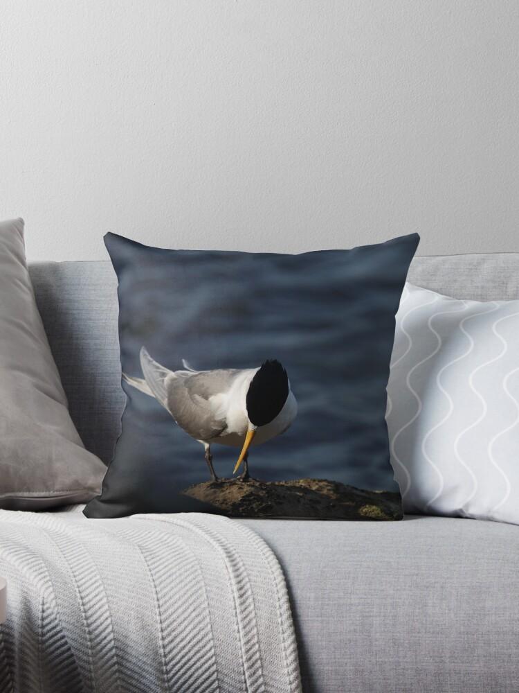 Quiet Crested Tern by myleneveilleux