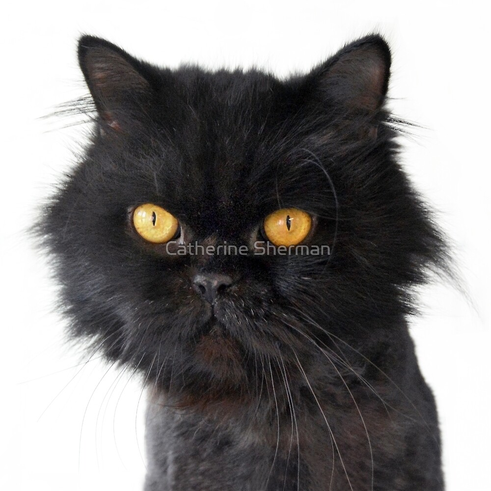 Black Persian Cat with Yellow Eyes by Catherine Sherman